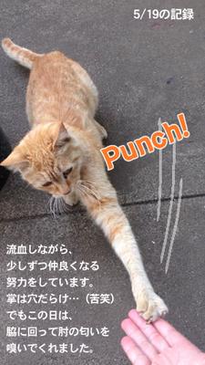 2013.5.19-punch.jpg